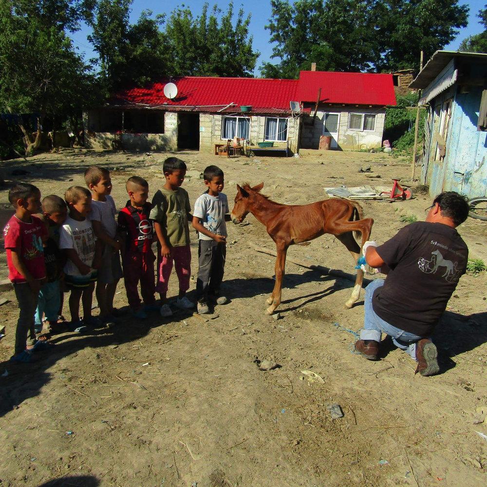 Damals, zu unseren Anfängen, zeigten wir den Menschen den fachgerechten Umgang mit ihren Pferden. Heute machen wir das noch immer! Team Equiwent schult Menschen, besonders die Kinder. Das Pferd ist das einzige Fortbewegungsmittel dieser Menschen.