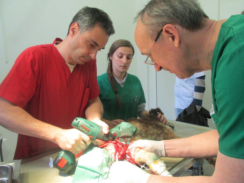 In einer Operation wurde das Bein amputiert. Einen Tag später war der Hund wohl auf.