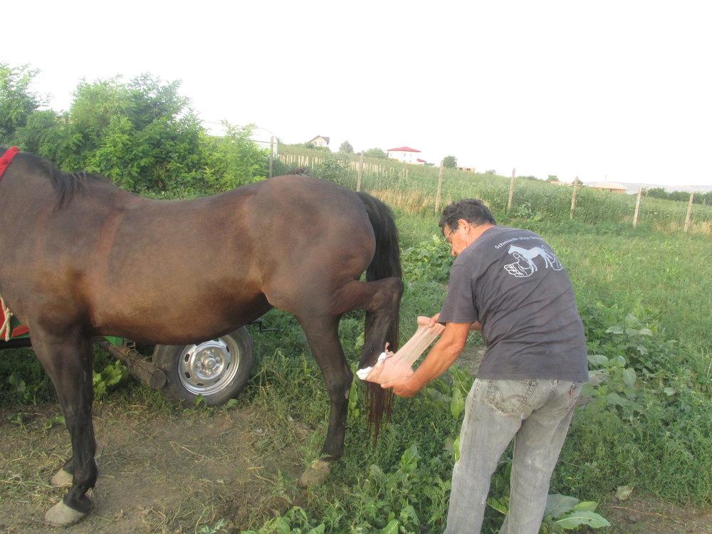 Pferd in Rumänien, gut genährt! In Deutschland ist das auch nicht mehr selbstverständlich.