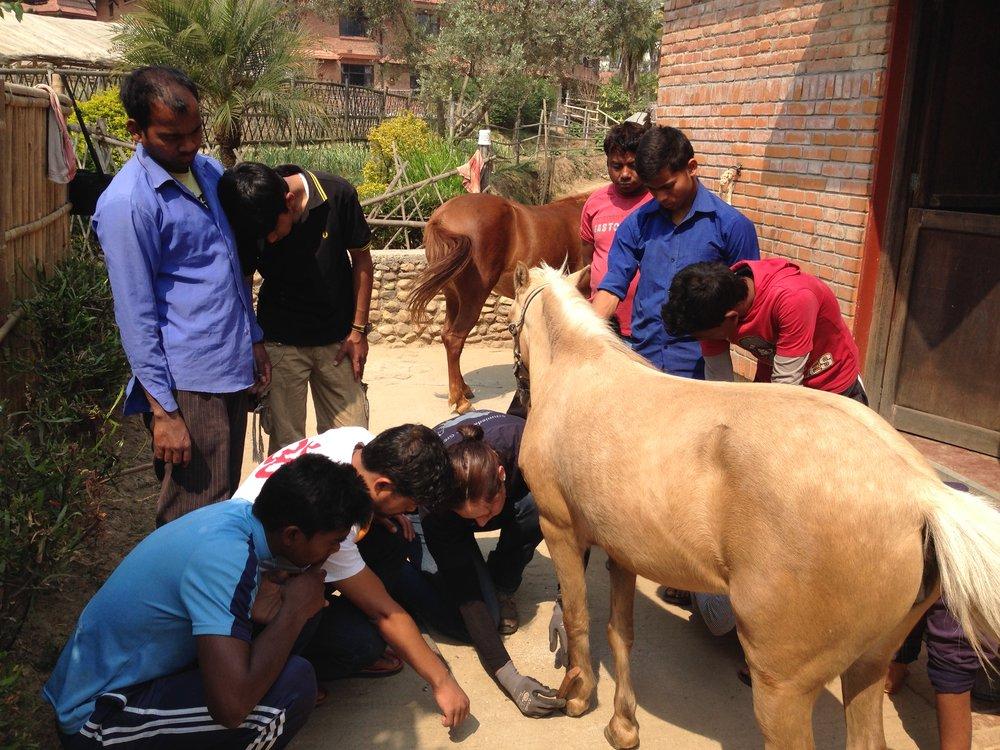 Tiffany Hild erklärt den Nepalesen die fachgerechte Hufbearbeitung.