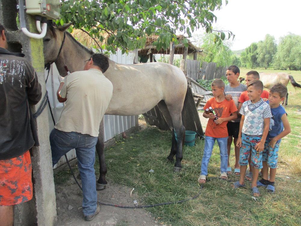 Dr.Ursache versteht es wie kein anderer die örtlichen Kinder mit     einzubeziehen. Er ist nicht nur ein Tierarzt sondern auch ein Seelsorger und     Beschützer für die Kinder und die Pferde.