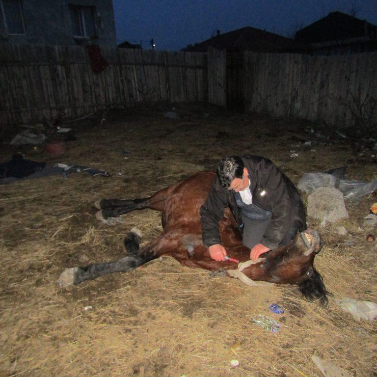 Dr Ursache kämpft um das Leben eines   Pferdes, mit Erfolg.Dieses Bild ist nur eines von   vielen täglichen Situationen welche verdeutlichen   wie wichtig unsere Arbeit ist. Bitte helfen sie uns   dabei mit einer Spende.