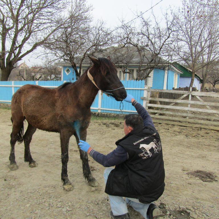 Die Pferdeversorgung ist unser größter Bereich.