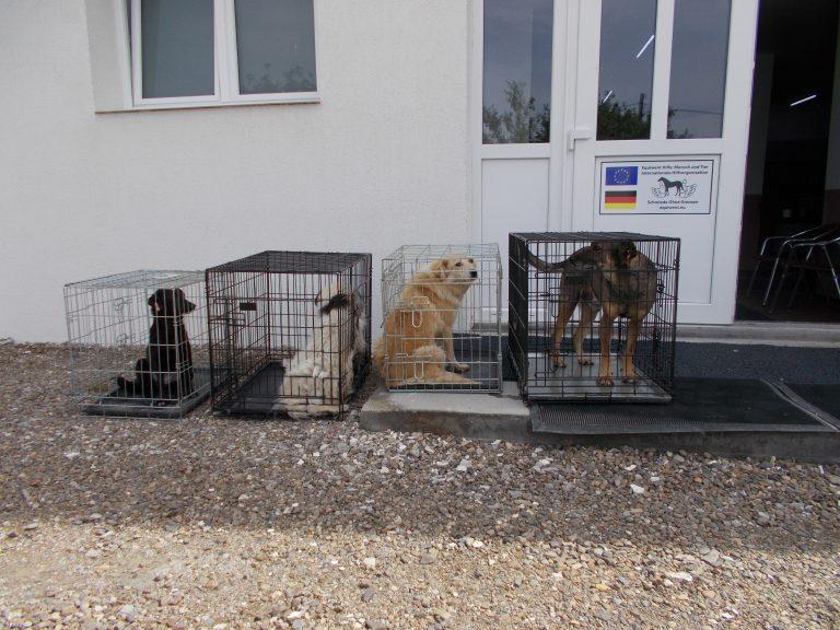 Immer viel Los bei Equiwent, soeben wurden diese Hunde angeliefert !