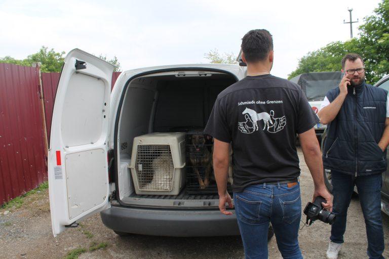 Team Equiwent verbringt die ersten Hunde     in die eigene Tierklinik.