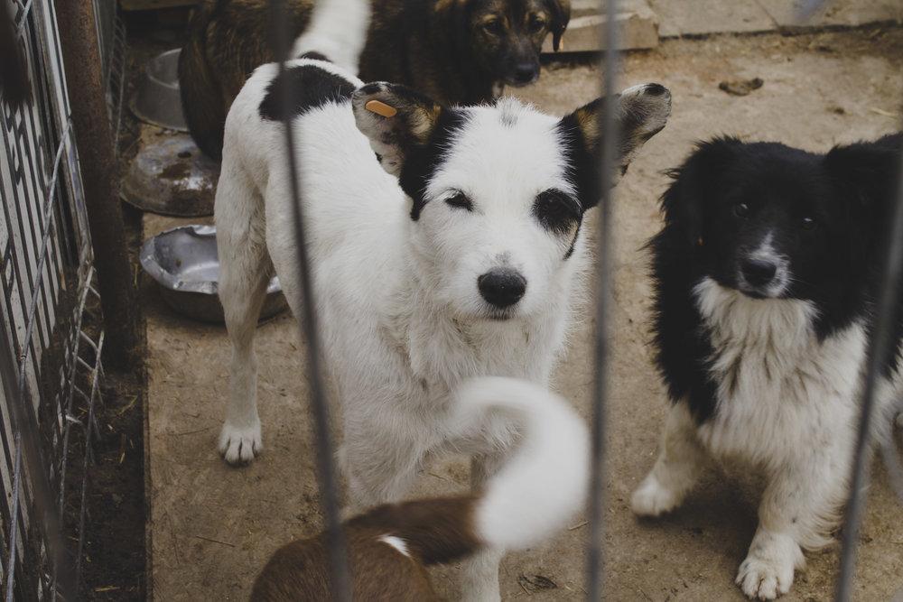 Kastrationsprogramm für Hunde in Ost-Europa -