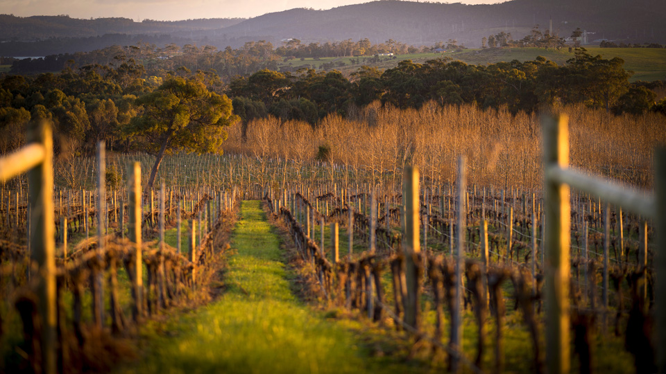 Tamar Valley Wine Region