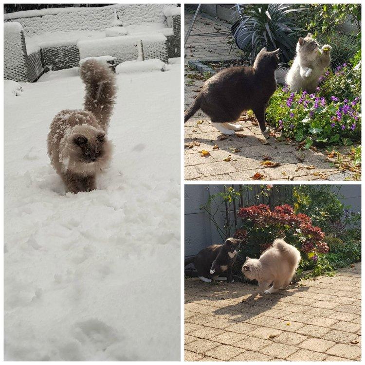 Katten in tuin, binnenkat, buitenkat