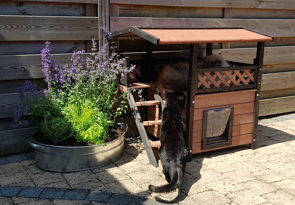 kattenhuis in tuin.jpg