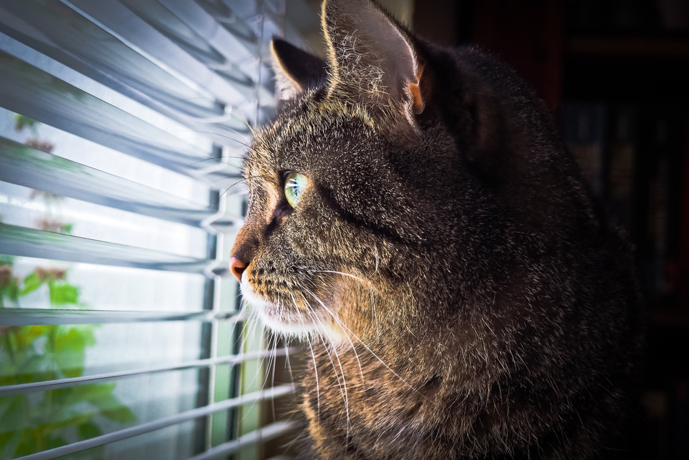 kattenoppas Purrfect Solution vermaak binnenkat 2.png