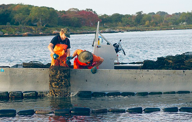 Fishers Island (NY) Oyster Farmers in action.