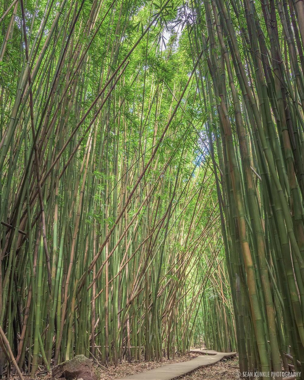 MCC_bamboo.jpg