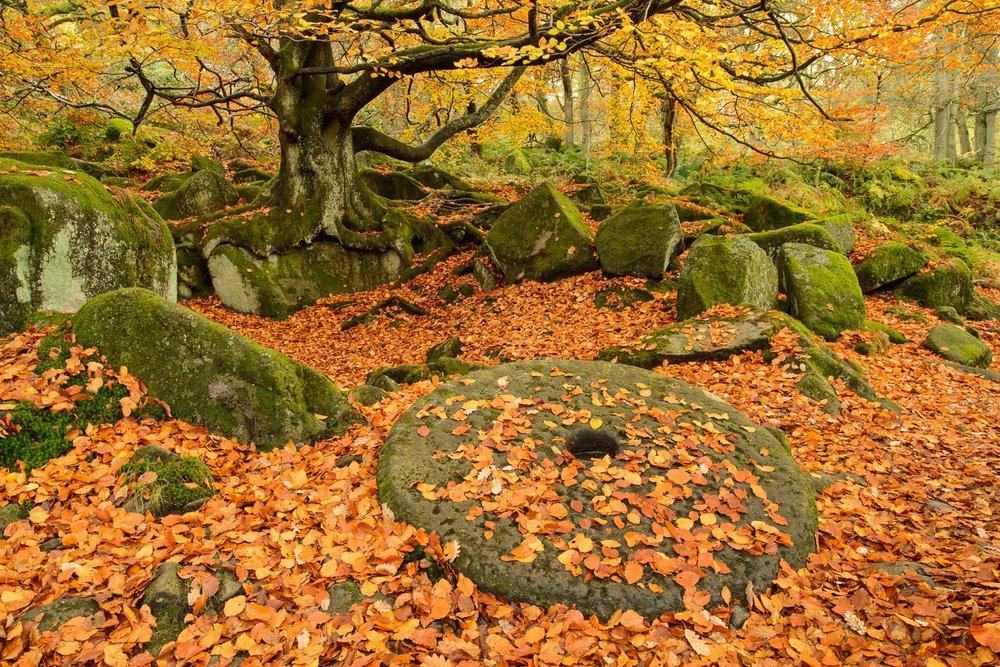 Abandoned Millstone