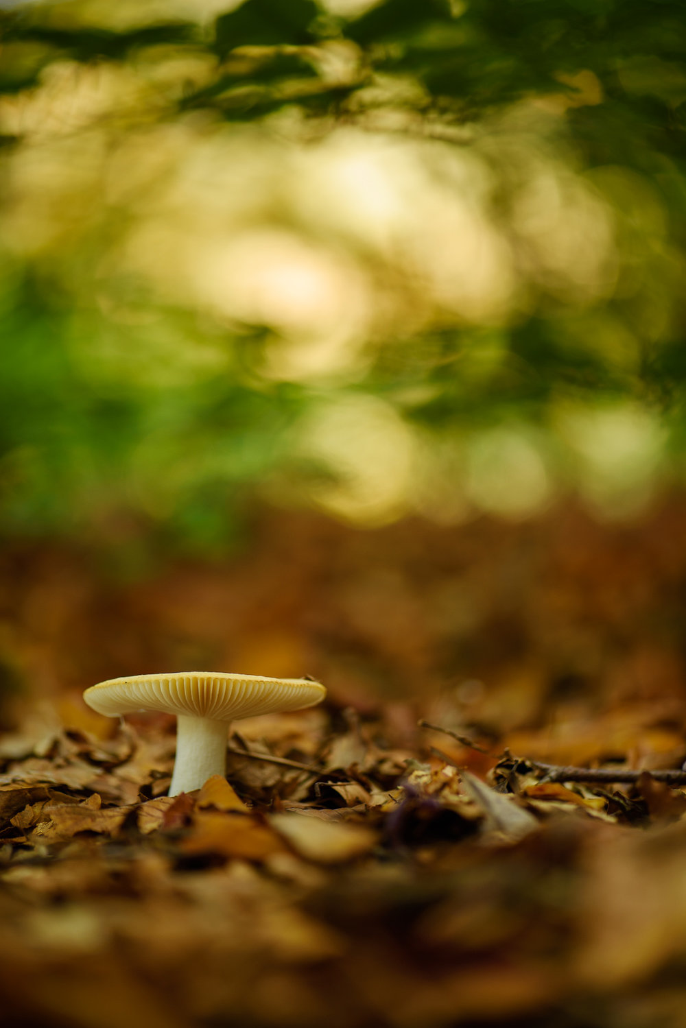Fungi in Deciduous Woodland
