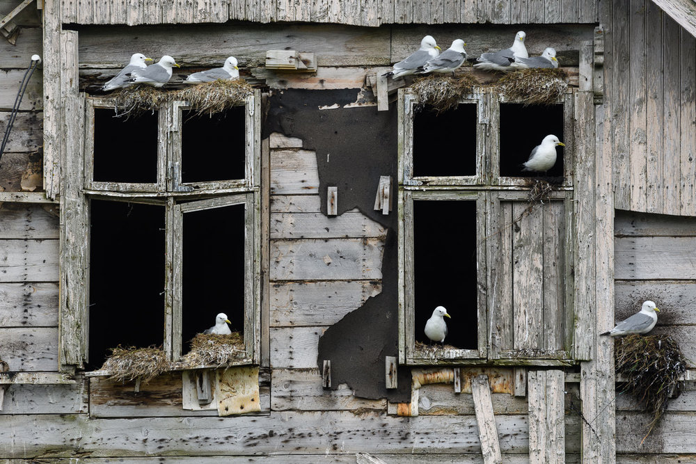 The Kittiwake House