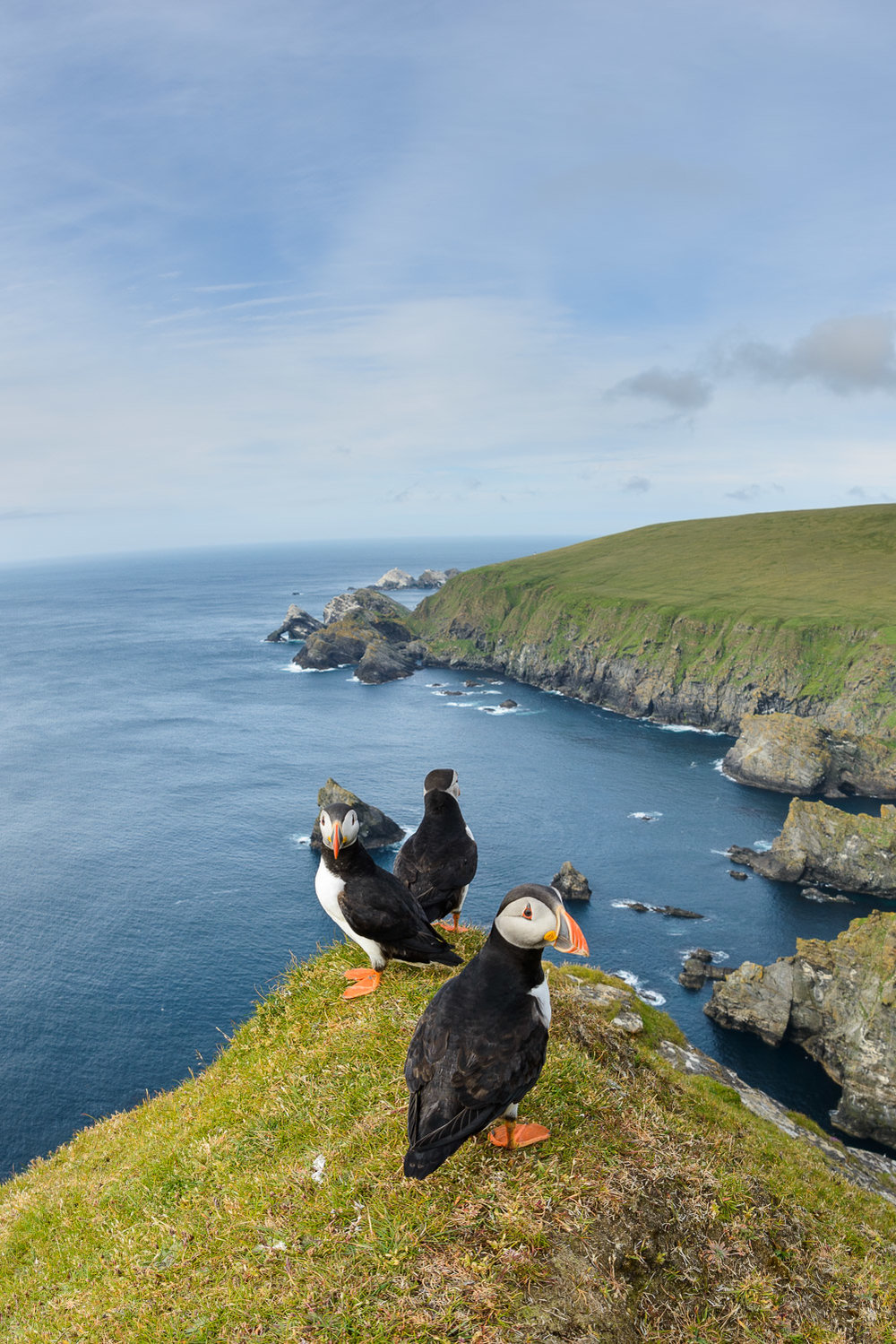 Puffins at Hermaness