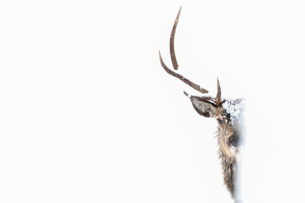 Brother Deer