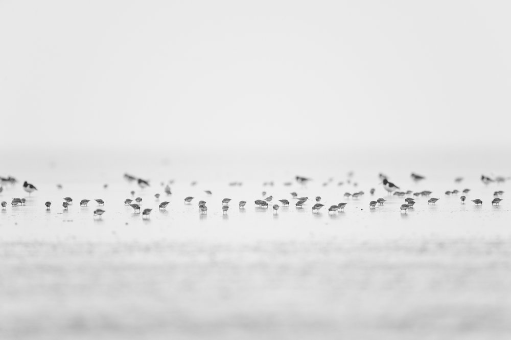 Waders on a Mudflat