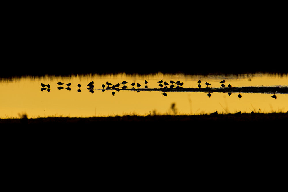 Lapwing Roost