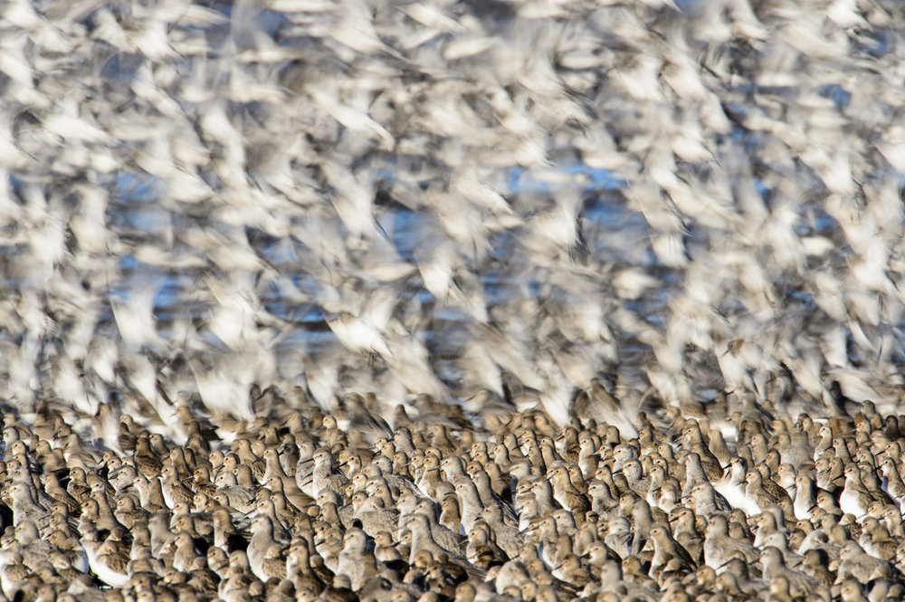 Knot Roost
