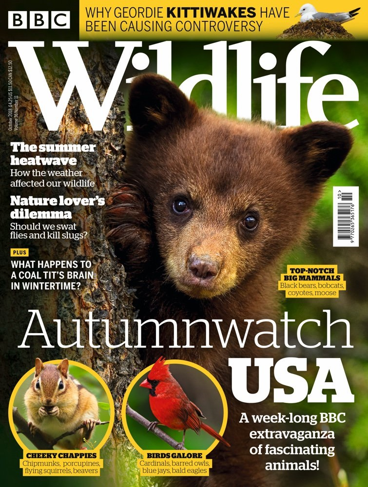 BBC Wildlife Magazine October 2018
