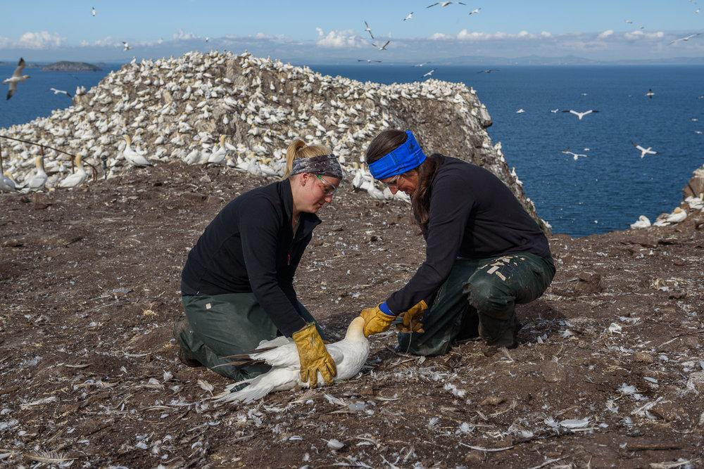 Gannet Research