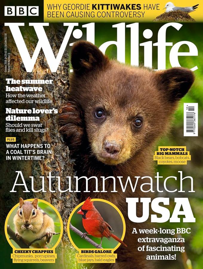 BBC_Wildlife_Magazine_October_2018_Cover_JPEG.jpg