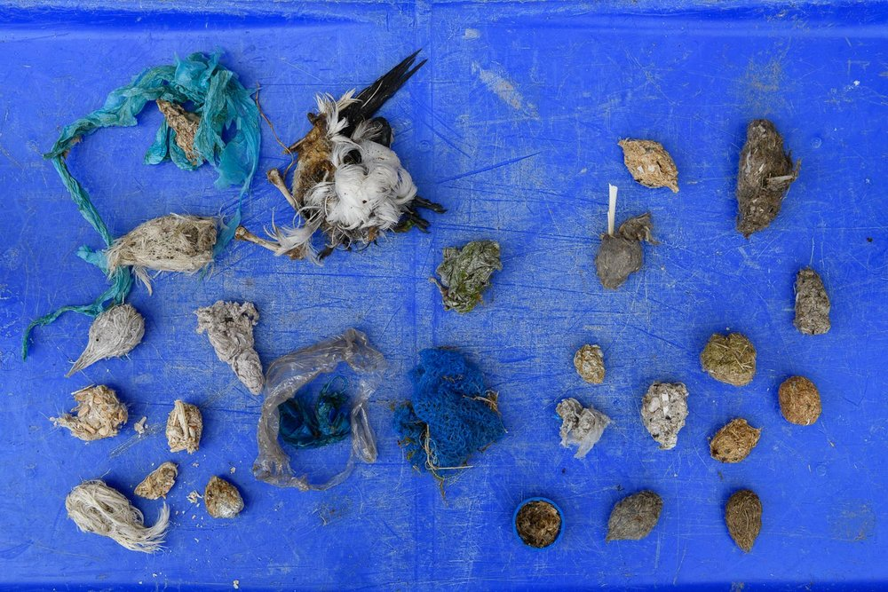 Gull Pellets On Discarded Fishing Box