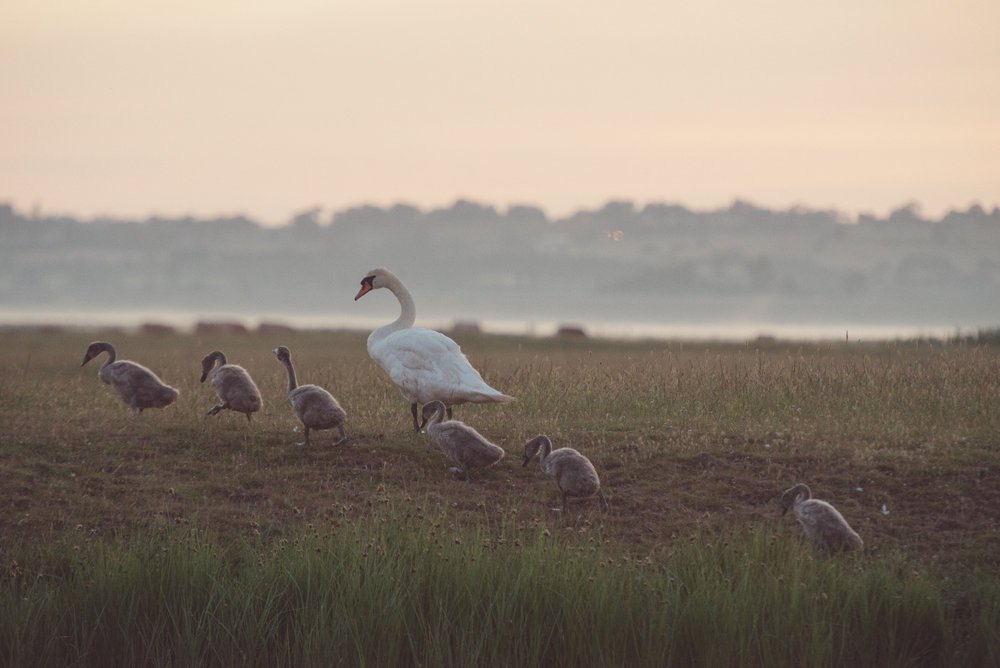 Wellbeing Retreat at Elmley Nature Reserve