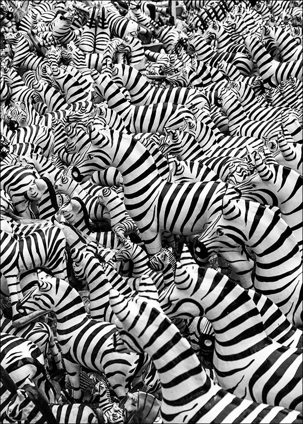Zebras, Bangkok.