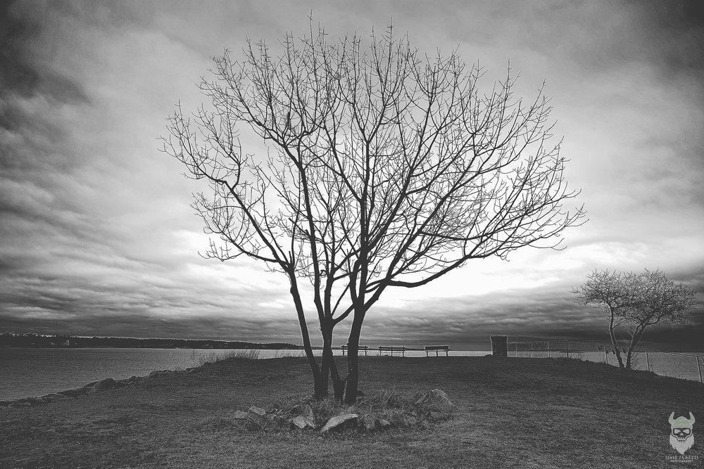 jz-treesolo.jpg