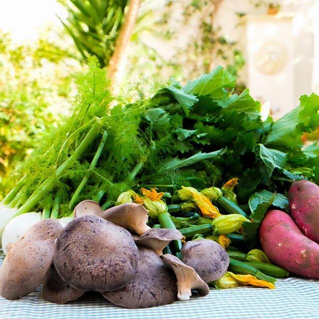 The bounty of Puglia! Local produce: Rape, zucchine, funghi, finocchi e patate dolci. (non mostrato: ricotta fresca e uova) #eatwith#eatwithitaly #pugliadavedere #simplefood #mangiareinpuglia #weareinpuglia #farmersmarket #insta_salento #lecce #freshproduce #salento #puglia #salentogustolecce #semplicemalta