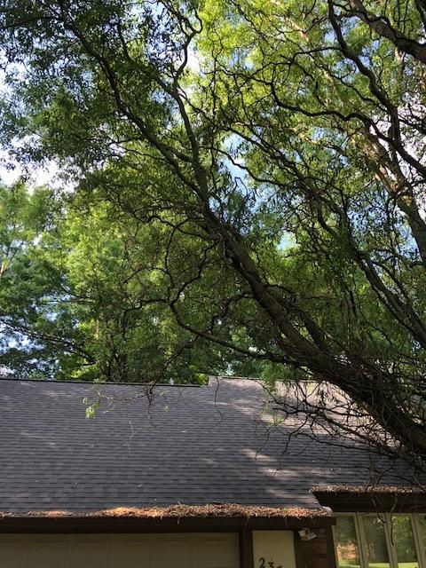 Overgrown Ornamental Tree.jpg