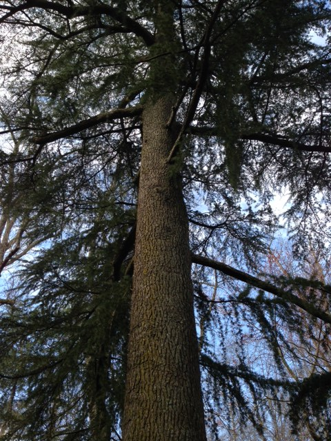 A homeowner needs to cut down a magnificent deodar cedar tree because the roots are undermining the house's foundation. A local furniture craftsman knows there's a market for contemporary furniture incorporating slabs of the prized cedar species. It's a perfect opportunity for Eutree to convert the tree into Forest Free material.