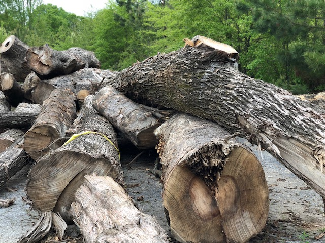 Once the logs arrived at Eutree's lumberyard, each log was evaluated to determine optimal use of its timber.