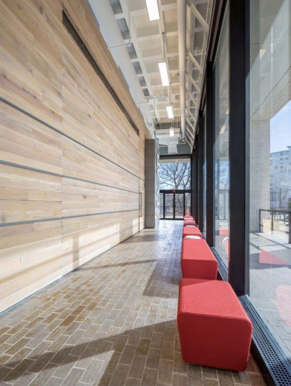 AIA ATL Forest Free White Oak Winter Forest Paneling.jpg