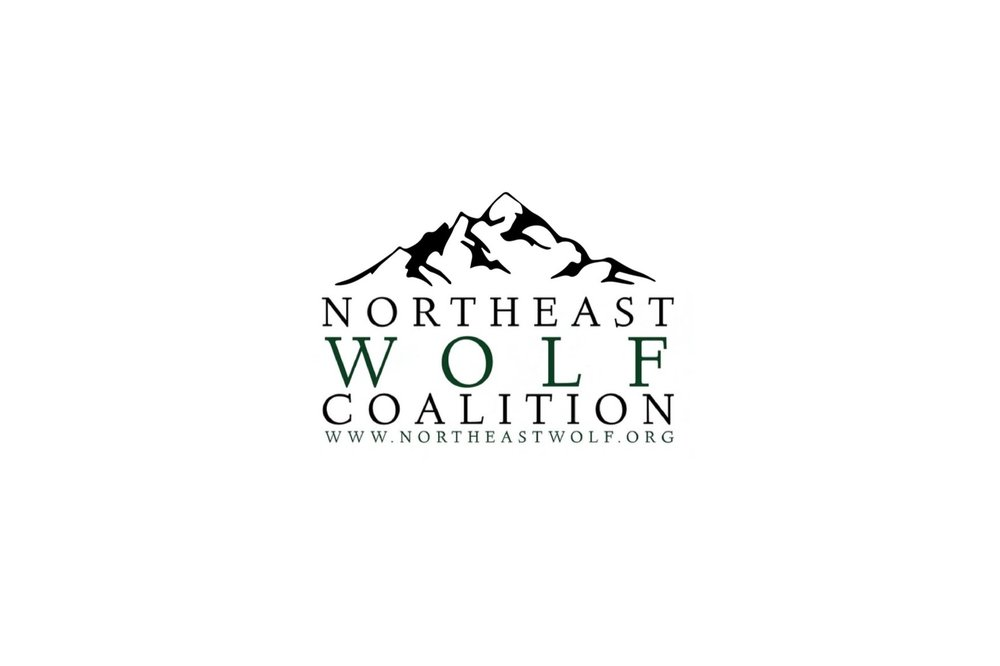 Northeast Wolf Coalition | Melissa DiNino | Montana Graphic Designer