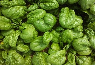 Baby Spinach.jpg