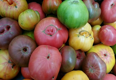 market shot of all heirlooms.jpg