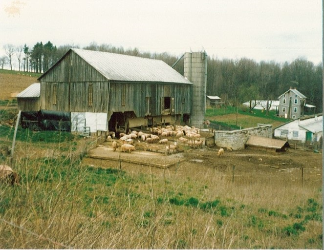 orginal barn and packhouse.jpg