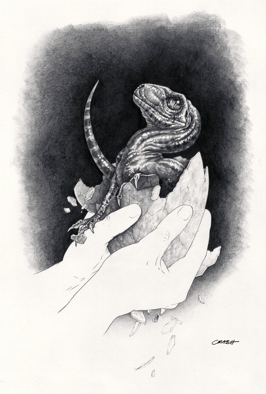 Baby Raptor.jpg