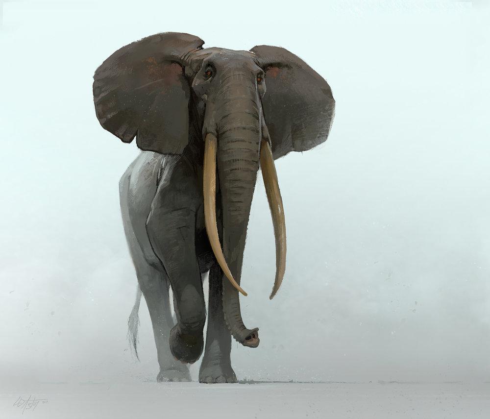 indanger-africanforestelephant.jpg
