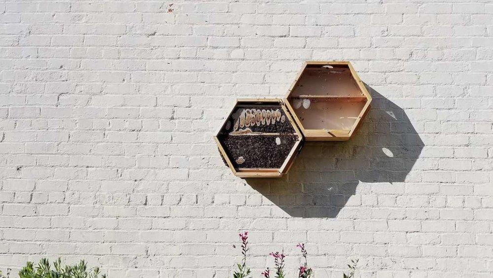 Beecosystem HexHive