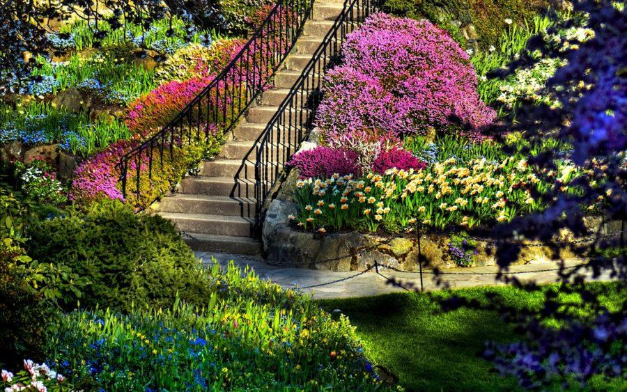 garden-900x563.jpg