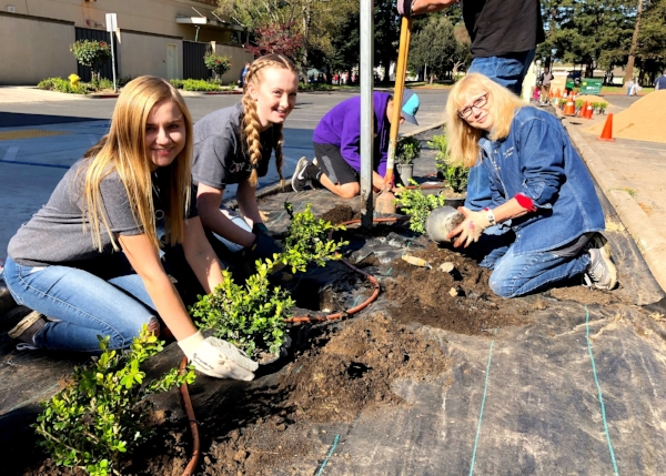 Teens planting boxwood hedges at Hutchins Street Square.
