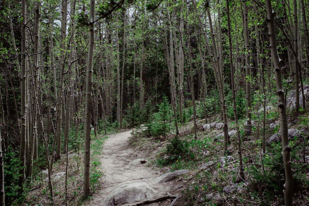 Through the aspen forest