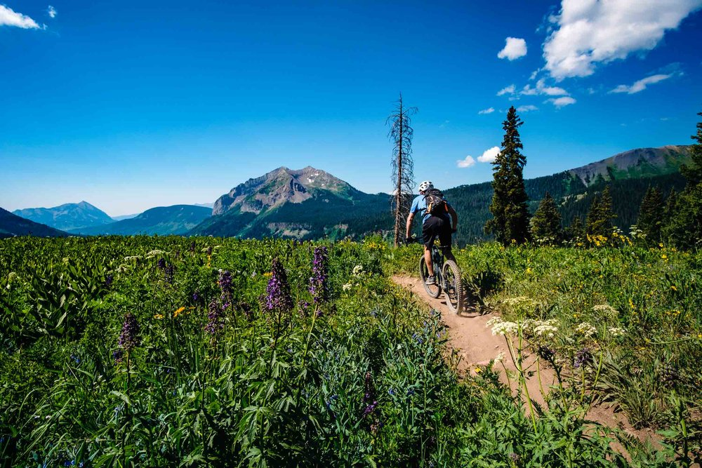 Mountain Biking on the 401 Trail outside of Crested Butte during wildflower season - Fuji XT2, Rokinon 12mm f/2