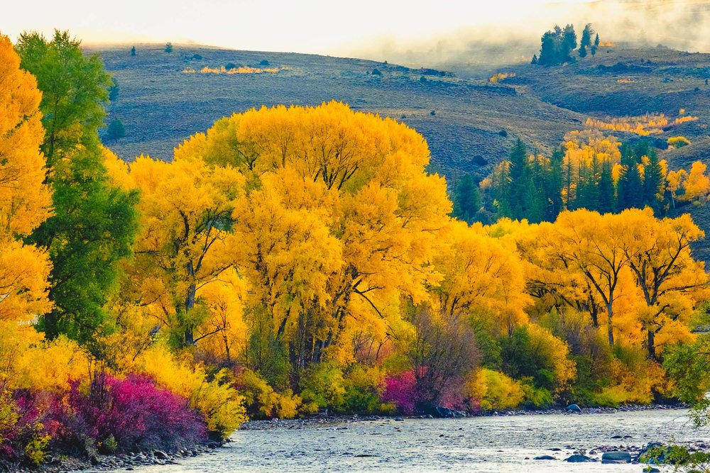 Colors along the Gunnison River