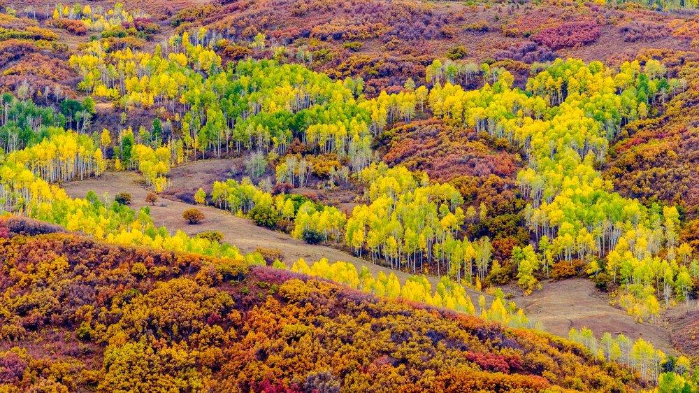 Fall Colors along the Cimmaron Mountain Range Fuji XT2, XF 50-140mm f/2.8 @ 110.6mm
