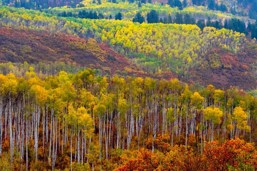 Brilliant West Elk Colors along the Kebler Pass Road near Paonia, Colorado - Fuji XT2, XF 50-140mm f/2.8 @ 77.3mm